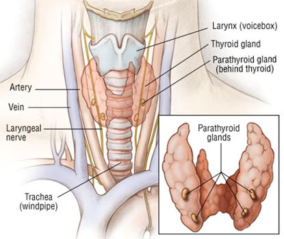 Parathyroid Surgery Ear Nose Throat Allergy Specialist